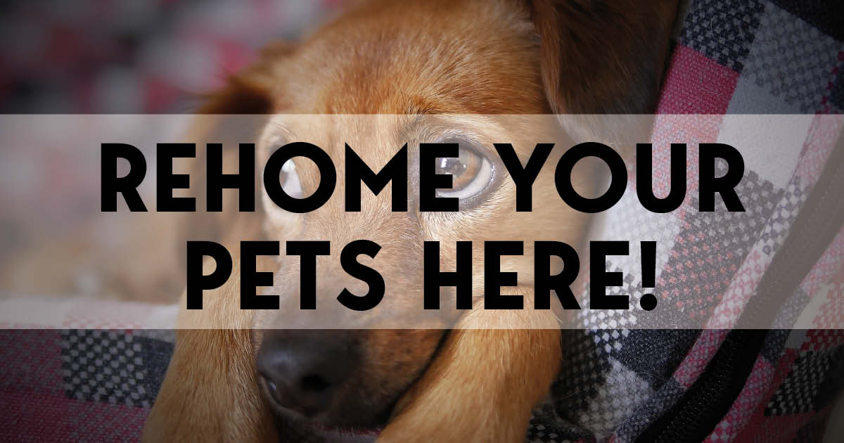 rehome your pets here-featured